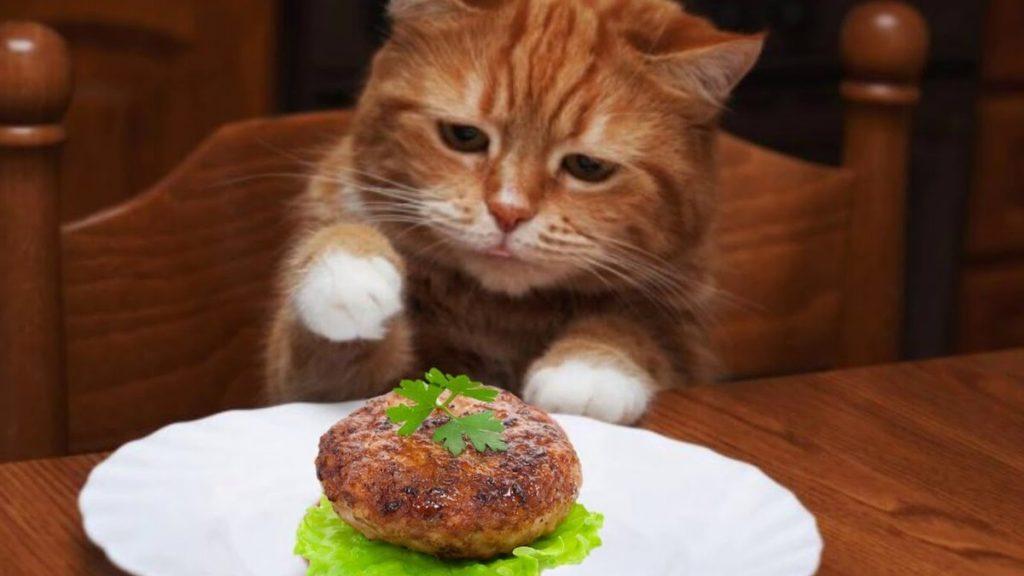 кот Томас